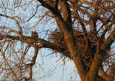 2012 - Decorah Eagles - Nora - Picasa Web Albums