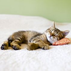 Tips to Prepare Your Home for a New Kitten. #adoptacatmonth