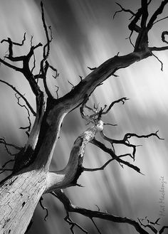 Mat Mackenzie.  Tree photo.