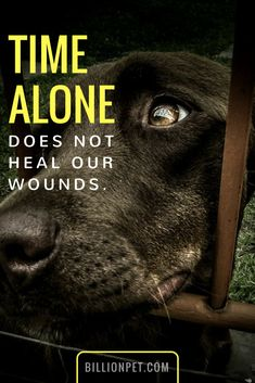 Time alone doesnt heal our wounds I Love Dogs, Puppy Love, Cute Dogs, Dog Rules, Love Hurts, Meaningful Quotes, Mans Best Friend, Belle Photo, Deep Thoughts