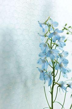 PiP Shanghai Bows Blue wallpaper | Pip Studio