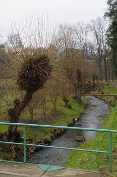 Úštěcké vrby