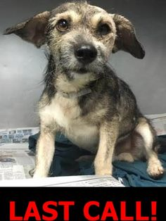 transferred to Humane society greater Miami --- Very Sweet, Injured Dog, A1784287, Needs Rescue ASAP under foster 2 rescue. located at Miami Dade Shelter https://www.facebook.com/urgentdogsofmiami/photos/pb.191859757515102.-2207520000.1462977745./1193608597340208/?type=3&theater