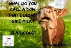 Tell us your favorite cow joke! Farm Jokes, Farm Humor, Dog Jokes, Puns Jokes, Corny Jokes, Animal Jokes, Funny Animal Memes, Cute Funny Animals, Animal Funnies