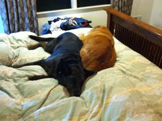 Chloe was lonely without her family, so Buddy did his part and napped with her to make her feel safe and loved.