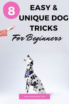 Dogs love learning new things every day. Teaching your dog new tricks is a fun way to incorporate mental training and bonding into your daily schedule. Each time you train with your dog, he will be ab Training Your Puppy, Dog Training Tips, Training Classes, Training Videos, Brain Training, Puppy Training Schedule, Training Pads, Toilet Training, Training Collar