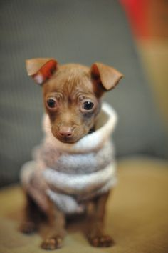 chi chi as a baby