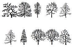 Read the Tree Leaves, With an Artist's Invented Tree Font