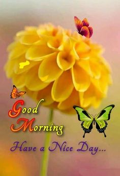 Good Morning Images For Whatsapp Good Morning Beautiful Pictures, Good Morning Images Hd, Good Morning Picture, Morning Pictures, Good Morning Happy Sunday, Good Morning Cards, Morning Gif, Good Morning Quotes, Quotes For Whatsapp