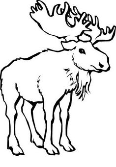 Antelope 8 | Deer coloring pages, Free printable coloring ...