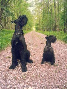 Hunde Foto: Peter und Sam & Flummi - Gute Freunde Hier Dein Bild hochladen: http://ichliebehunde.com/hund-des-tages  #hund #hunde #hundebild #hundebilder #dog #dogs #dogfun  #dogpic #dogpictures