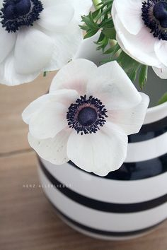 BLACK & WHITE poppies, flowers, striped vase - beauty 16
