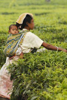 Babywearing while working as a tea picker in Darjeeling, India.