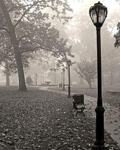 Foggy park...