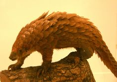 <p>The tragic photo that Hilton took of the frozen pangolins shows us that if this species has any chance of being saved, we need to act fast.</p>