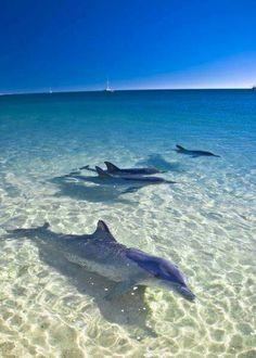 Swim with the dolphins at Monkey Mia Beach, Shark Bay, Western Australia