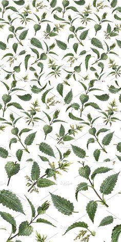 Pencil Design, Pencil Illustration, Pencil Drawings, Plant Leaves, Plants, Pattern, Patterns, Planters, Plant