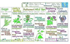 Herbs that heal... and a super-easy way of understanding them!