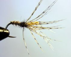 Kerbari style spider