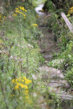 Stream nature! Córrego!