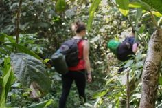 Trekking in the jungle, Nam Ha primary forest, Northern Laos, South East Asia For trekking information visit our website here https://thehikerlaos.com #trekking #trekkingAsia #adventure #ecotours #JungleTrek #SouthEastAsia