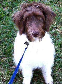 Our holistic pets!  http://www.holisticpetcuisine.com