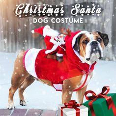 20+ Best Dog Christmas costumes images | christmas dog