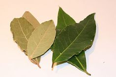 Bay:  Ruler: Sun, Apollo  Type: Herb  Magickal Form: Leaves, powder, oil.  Magickal Uses: An all-around successful herb, bay/bay laurel was originally offered only to the Gods. Later on it was used to crown the victories of the ancient Olympic games. It's still considered an herb of Success & Victory. Add the leaves to your bath or crush them into powder & Burn for success...