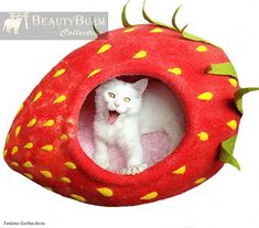 Hey, I found this really awesome Etsy listing at https://www.etsy.com/listing/154378884/cat-bed-cat-cave-cat-house-eco-friendly
