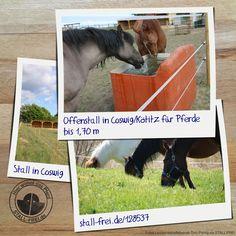 Im Offenstall ist ein Platz für ein Pferde bis 1,70 m frei. Das könnte was für dein Pferd sein, dann erfahre hier mehr 👉🏻 www.stall-frei.de/-128537  #stallfrei #Rehepferd #Offenstall #Wallach #Stute #Barhufer #Futterkammer #Paddock #Heuraufe #Weide #reiten Stall Frei, Wallach, Horses, Dogs, Animals, Dog Playpen, Animales, Animaux, Pet Dogs