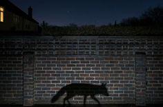 Las mejores imágenes del premio de fotografía de la vida silvestre más importante del mundo - BBC Mundo