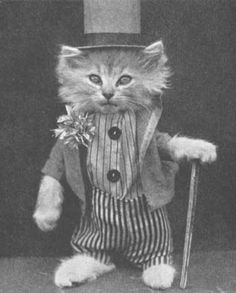 Vintage Cat wearing a top hat