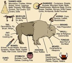visual of how Native Americans used all the parts of a buffalo.Awesome visual of how Native Americans used all the parts of a buffalo. The Meaning of Native American Horse Markings Plains Bison vs Wood Bison Medicine Wheels & Shamanic Cosmology Native American Wisdom, Native American History, American Indians, American Bison, American Symbols, American Women, American Quotes, Native American Hunting, Native American Longhouse