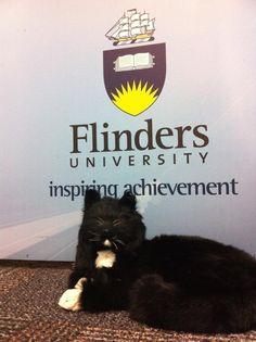 Flinders University on Facebook hit 10, 000 likes this week!  Thank you everyone for liking the page! Trim loves the exposure! www.facebook.com/flindersuniversity