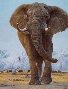 Monna Tota, 2017 - Works - Wildlife Art of John Banovich Asian Elephant, Elephant Love, Elephant Art, Elephant Drawings, Horse Drawings, Elephant Photography, Wildlife Photography, Wildlife Paintings, Wildlife Art