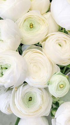 Rose Like Flowers, Flowers For Sale, Beautiful Flowers Garden, Burgundy Flowers, Pretty Flowers, White Flowers, Ranunculus Wedding Bouquet, Ranunculus Flowers, Wedding Flowers