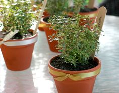 mini potted herb party favors for a wedding shower, baby shower, garden party or such