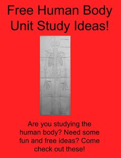 Free Human Body Unit Study Ideas! Come check out all the fun we had and get some great ideas for your human body unit study!