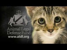 Last year, Americans spent roughly $ 18 billion dollars on coffee - and virtually nothing to protect animals from some of the worst abuses imaginable. Is this who we are? At the Animal Legal Defense Fund -- http://www.aldf.org -- we believe that we are better than that - and were fighting every day to win the case against cruelty for our countrys animals.