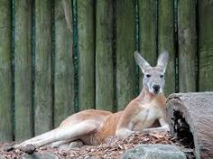zoo de taronga sydney - Recherche Google