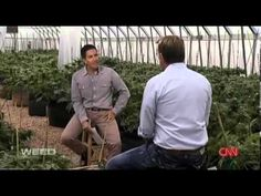 CNN documentary on Charlotte's Web, medical marijuana treating seizure disorders - ✅WATCH VIDEO http://alternativecancer.solutions/cnn-documentary-on-charlottes-web-medical-marijuana-treating-seizure-disorders/   	  A short version of Dr. Sanjay Gupta's CNN documentary, called Weed. This short version focuses on the incredible difference that a particular branch of medicinal cannabis that is low in THC and high in CBD is doing when given in the form of oil to child