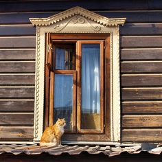 CyBeRGaTa - Mostly Cats, New Mexico & Memes — cat-in-windows: (via . I Love Cats, Cute Cats, Funny Cats, Cat Window, Lots Of Cats, Looking Out The Window, Orange Cats, Ginger Cats, Here Kitty Kitty