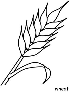 Wheat Flowers Coloring Pages printable coloring page image for kids of all ages. Tree Coloring Page, Fall Coloring Pages, Flower Coloring Pages, Free Coloring, Coloring Books, First Communion Banner, Première Communion, First Holy Communion, Communion Banners