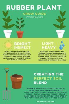 How to Grow Rubber Plants! House Plants Decor, Plant Decor, Garden Plants, Indoor Plants, Ficus Elastica, Rubber Plant Care, Snake Plant Care, Calathea Plant, Plant Guide