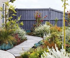 An easy-care coastal garden in Torquay with colourful plants Sorting out a multi-level garden with beds sporting vibrant, low-growing plants has made this coastal patch in Torquay a standout. Australian Garden Design, Australian Native Garden, Seaside Garden, Coastal Gardens, Bush Garden, Terrace Garden, Garden Plants, Xeriscape Plants, Vegetable Garden