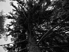 Photographer Satu Ylavaara´s CV: Suomalainen metsä Lappland, Rocky Horror, The Clash, Swansea, 50 Shades, Black And White Photography, Artwork, Plants, Black White Photography
