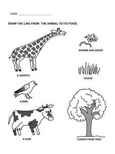 food and shelter of animals worksheet google search toddler worksheetspreschool worksheets freepreschool - Free Printable Toddler Worksheets