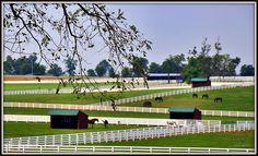Kentucky Horse Park, Lexington, KY