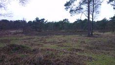 Open plekken in het bos #utrechtpad #wandelen