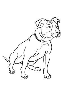 Printable pit bull coloring page. Free PDF download at http://coloringcafe.com/coloring-pages/pit-bull/